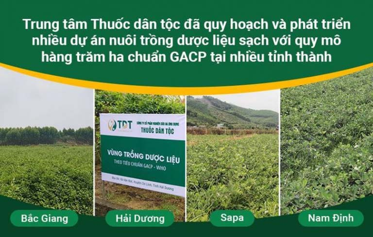 Hình ảnh hệ thống vườn dược liệu sạch của Trung tâm Thuốc dân tộc tại nhiều địa phương